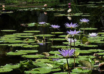 Treasure Coast Photograph - Sprinkling Of Purple Water Lilies by Sabrina L Ryan