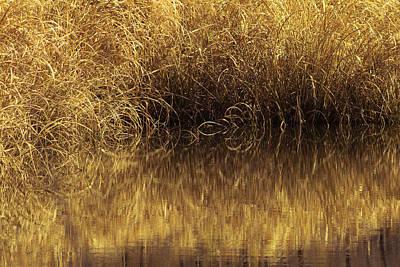 Spun Gold Print by Annette Hugen