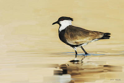 Lapwing Digital Art - Spur-winged Lapwing by Avi Meir