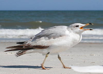 Seascape Photograph - Squawking Gull by Cathy Lindsey