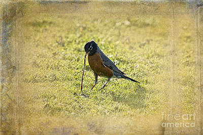 Bird And Worm Photograph - Squirm Worm by David Arment