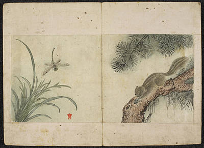 Squirrel And Dragonfly Print by British Library