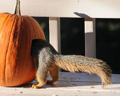 Pumpkin On A Bench Photograph - Squirrel And Pumpkin - Breakfast by Aaron Spong