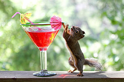 Alcohol Photograph - Squirrel At Happy Hour by Peggy Collins
