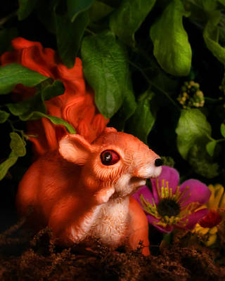Pop Surrealism Photograph - Squirrel by Diane Bradley
