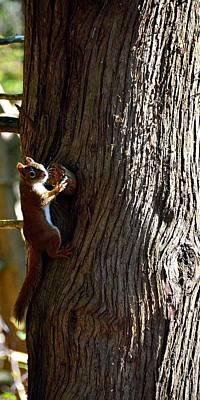 Squirrel Print by Jeffrey J Nagy
