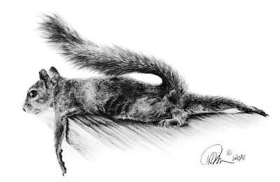 Squirrel Drawing - Squirrel by Mario Pichler