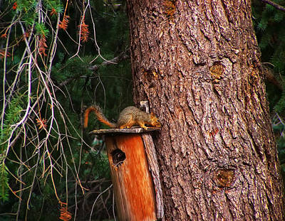Squirrel Digital Art - Squirrel On Top Of Birdhouse by Chris Flees