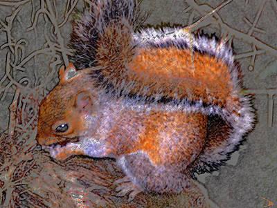 Acorn Digital Art - Squirrel With Acorn by David Lee Thompson