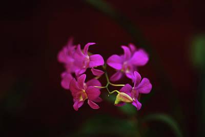 Sri-lanka, Kandy, Peradeniya Botanical Print by Stephanie Rabemiafara