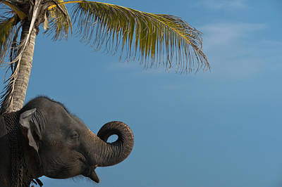 Simple Beauty In Colors Photograph - Sri Lanka, Near Unawatuna, Elephant by Ian Cumming