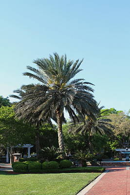 St. Mary's Palm 2 Print by Cathy Lindsey