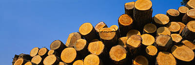 Large Group Of Objects Photograph - Stack Of Wooden Logs In A Timber by Panoramic Images