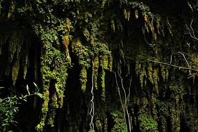 Stalactites At The Entrance To Las Cuevas De Camuy Original by Sandra Pena de Ortiz