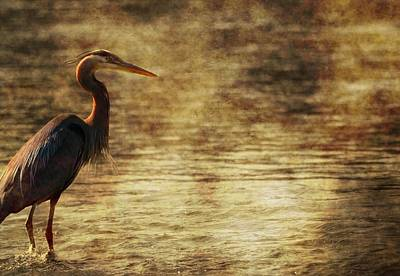 Heron Photograph - Stalking Fish Great Blue Heron by Dan Sproul