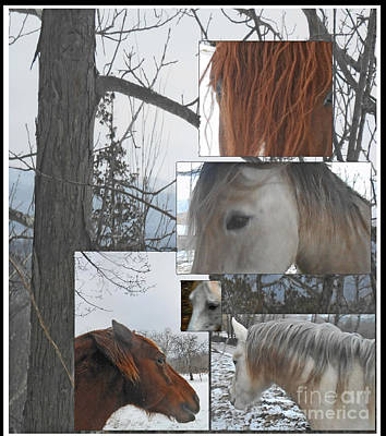 Stallions Collage There Is A Connection Print by Patricia Keller