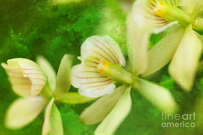 Flora Photograph - Stan Getz It by Floyd Menezes