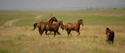 Horse Photograph - Stances by Rima Biswas