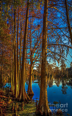 Cypress Trees Photograph - Stand Tall by Marvin Spates