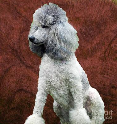 Retrievers Digital Art - Standard Poodle by Gena Weiser