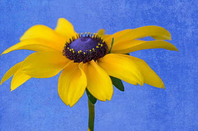 Floral Photograph - Standing Pretty by Garvin Hunter