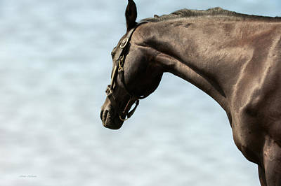 Equine Photograph - Standing Tall by Jillian  Chilson
