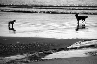 Standoff At The Beach Print by Aidan Moran