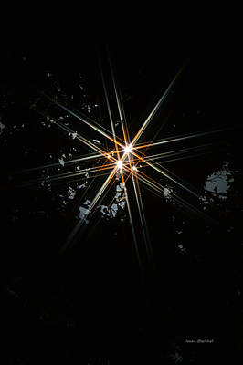 Star Bright Print by Donna Blackhall