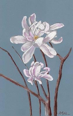 Plants Painting - Star Magnolia  by Anastasiya Malakhova