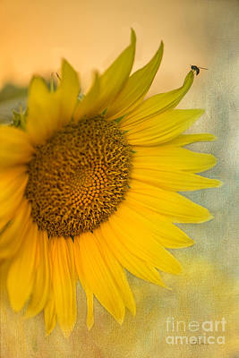 Blooming Digital Art - Star Of The Show by Betty LaRue