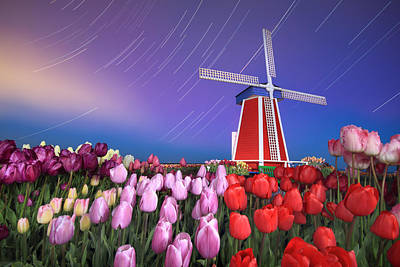 Star Trails Windmill And Tulips Print by William Lee