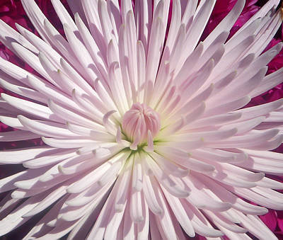 Aimeemaher Photograph - Starburst  by Aimee L Maher Photography and Art Visit ALMGallerydotcom