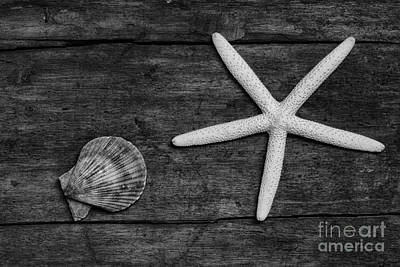 Starfish And Shell On Weathered Wood. Print by Paul Ward