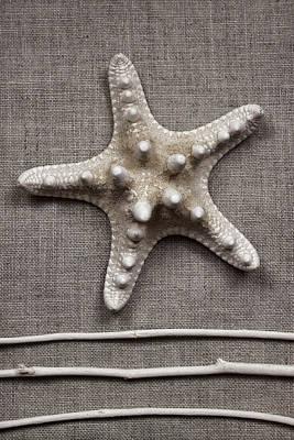 Seashell Photograph - Starfish And Sticks by Carol Leigh