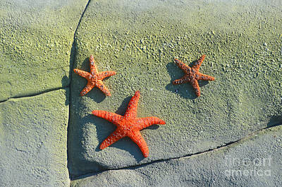 Starfish On The Rocks Print by Luther   Fine Art