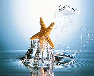 Starfish Rising On Water Bubble Print by Panoramic Images