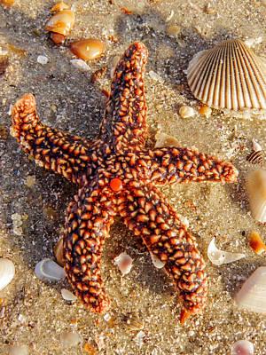 Starfish Photograph - Starfish by Zina Stromberg