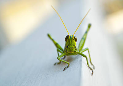 Grasshopper Photograph - Staring At Me by Shelby  Young