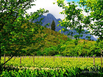 Stark Conde Wine Estate Stellenbosch South Africa 4 Print by Charl Bruwer
