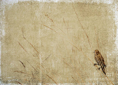 Reeds Photograph - Starling In The Reeds by Rebecca Cozart