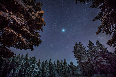 Cold Temperature Photograph - Starry Cold Night And Trees, Lapland by Panoramic Images