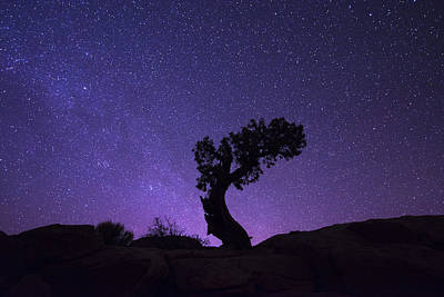 Southern Utah Photograph - The Dreaming Tree by Dustin  LeFevre