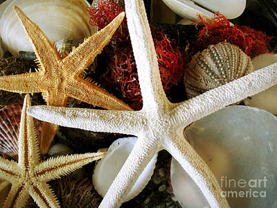 Still Life With Fish Photograph - Stars Of The Sea by Colleen Kammerer