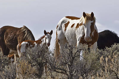 Wild Horse Photograph - Stay Away W1503  by Wes and Dotty Weber