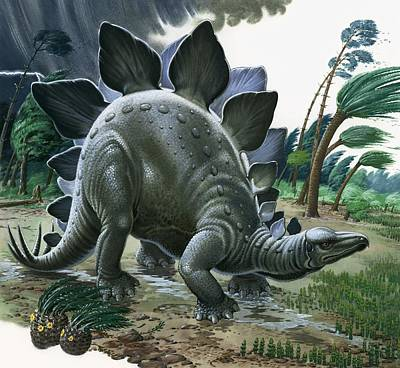Stegosaurus Print by English School