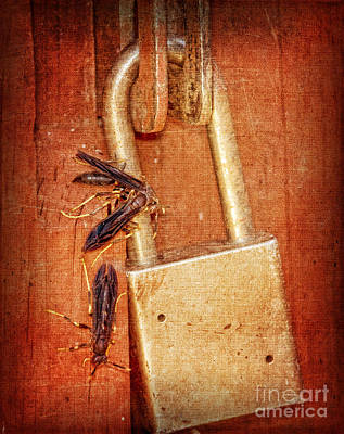 Wasp.insect Digital Art - Step Away From That Lock by Betty LaRue