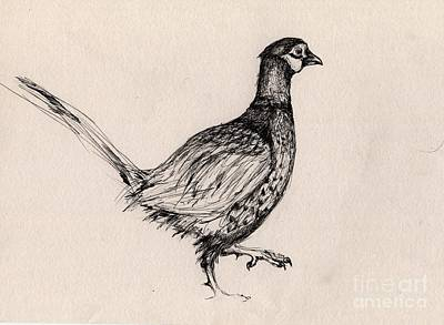 Pheasant Drawing - Step By Step by Angel  Tarantella
