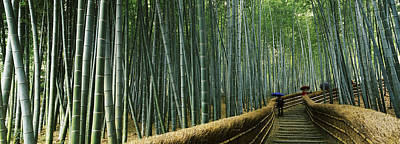 Bamboo Fence Photograph - Stepped Walkway Passing by Panoramic Images