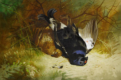 Color Painting - Still Life Of A Pair Of Blackgame by Celestial Images