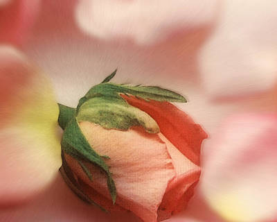 Photograph - Still Life Rose by Cliff  Norton
